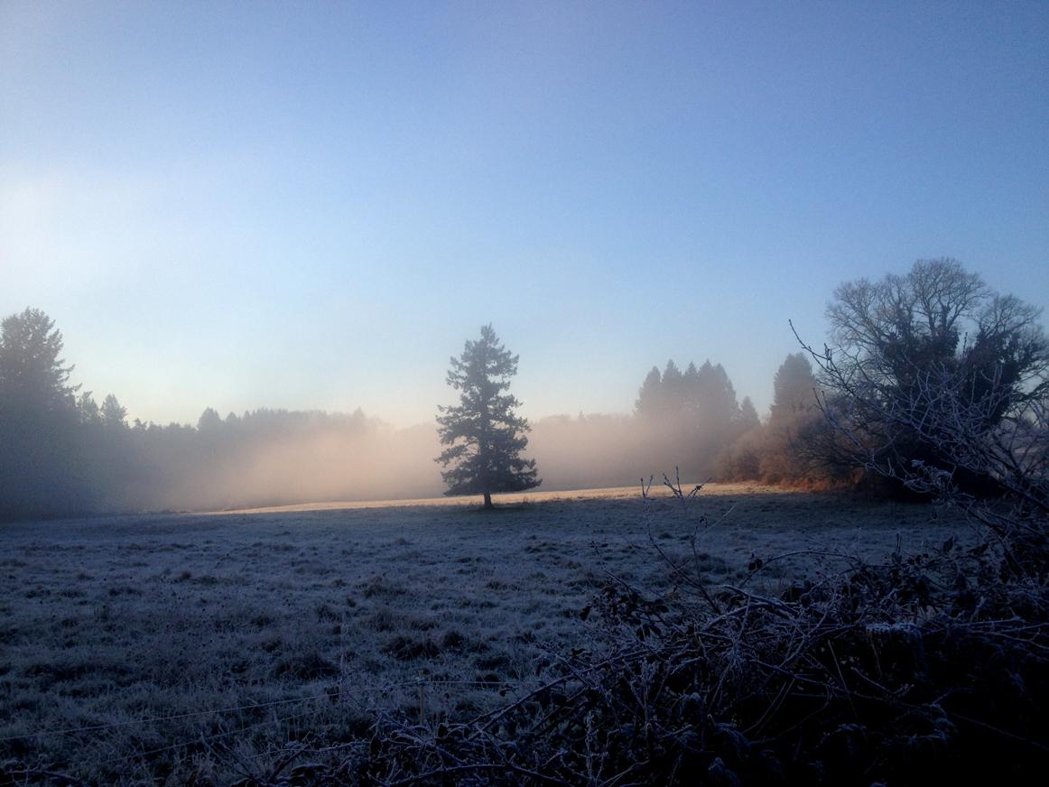 lumières d'hiver